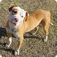 Adopt A Pet :: Mila - Tucson, AZ