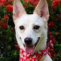 Adopt A Pet :: Yoyo - San Ramon, CA