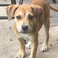 Adopt A Pet :: Misty - Marlton, NJ