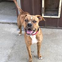 Adopt A Pet :: Tess - Southington, CT