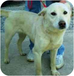 German Shepherd Dog Mix Puppy for adoption in Richmond, Illinois - SallyAnn