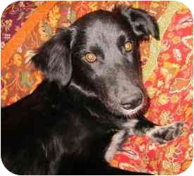 Border Collie Mix Dog for adoption in Sheboygan, Wisconsin - Sasha