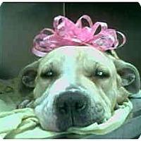 Adopt A Pet :: Fiona - Flint (Serving North and East TX), TX