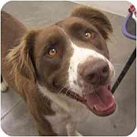 Adopt A Pet :: Kenzy - Phoenix, AZ