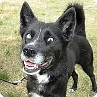 Adopt A Pet :: Honey - Cheyenne, WY
