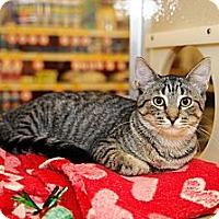 Adopt A Pet :: Joffrey - Farmingdale, NY