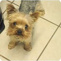 Adopt A Pet :: Bullet - N. Fort Myers, FL