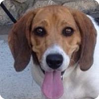 Adopt A Pet :: Piper - Canoga Park, CA