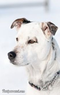 Jack Russell Terrier Mix Dog for adoption in High River, Alberta - Brewster