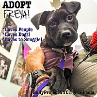 Adopt A Pet :: Freya - New York, NY