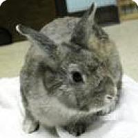 Adopt A Pet :: Finn - Maple Shade, NJ