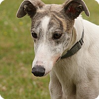 Adopt A Pet :: Bea - Portland, OR
