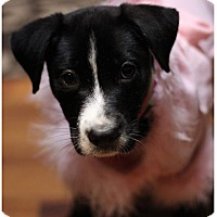 Adopt A Pet :: Zyra - Fredericksburg, VA
