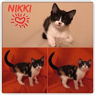 Domestic Shorthair Kitten for adoption in Jeffersonville, Indiana - Nikki