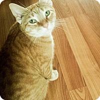 Adopt A Pet :: _Noah - Whitestone, NY
