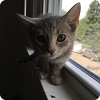 Adopt A Pet :: Delilah - Indianapolis, IN