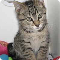 Adopt A Pet :: Danielle - New Kensington, PA
