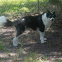 Adopt A Pet :: Ellie - Houston, TX