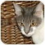 Photo 4 - Domestic Shorthair Cat for adoption in Tillamook, Oregon - Karleigh