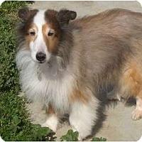 Adopt A Pet :: Charlie - La Habra, CA