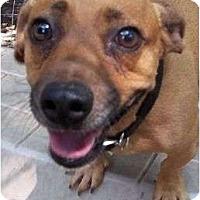 Adopt A Pet :: CeeCee - Plainfield, CT