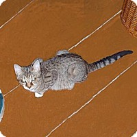 Adopt A Pet :: Peaches - Hampton, CT