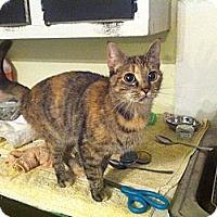 Adopt A Pet :: Valerie - Tarboro, NC