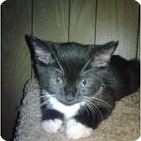 Adopt A Pet :: Brightie - Kirkwood, DE