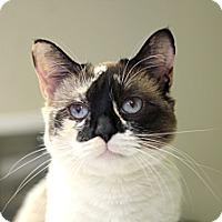 Adopt A Pet :: Sellafield - Chicago, IL