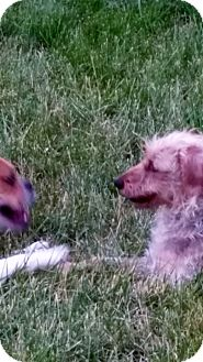 Terrier (Unknown Type, Medium) Mix Dog for adoption in Ft. Collins, Colorado - Winnie