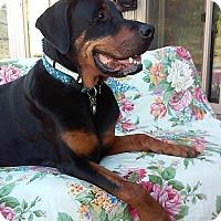 Adopt A Pet :: Bruce - Creston, CA