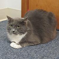 Adopt A Pet :: Gilbert - Oakland, OR