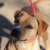 Adopt A Pet :: Nahalia (Nalla) - Clifton, TX