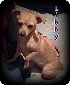 Chihuahua Dog for adoption in Denver, North Carolina - Libby