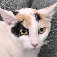 Adopt A Pet :: Dixie - Redondo Beach, CA