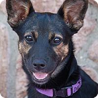Adopt A Pet :: Jelly Bean von Joli - Los Angeles, CA