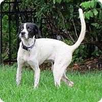 Adopt A Pet :: Teenie - Wood Dale, IL