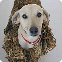 Adopt A Pet :: Judy - Cuero, TX