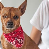 Adopt A Pet :: Twinkie - Victoria, BC