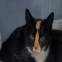 Adopt A Pet :: Diem - Manteo, NC