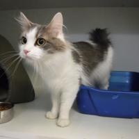 Adopt A Pet :: Anna - Bardstown, KY
