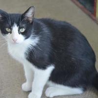 Adopt A Pet :: Clyde - New Iberia, LA