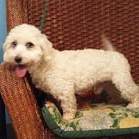 Adopt A Pet :: Barney - Tulsa, OK