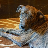 Adopt A Pet :: Jenelle~adopted! - Southbury, CT