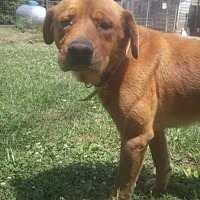 Adopt A Pet :: brussels - Foristell, MO