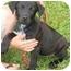 Photo 3 - Labrador Retriever Mix Puppy for adoption in Inman, South Carolina - Skippy