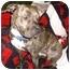 Photo 3 - American Staffordshire Terrier Mix Dog for adoption in Seattle, Washington - Romeo