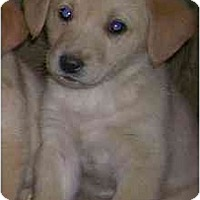 Adopt A Pet :: Lizzy - Chandler, IN
