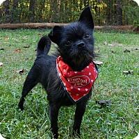 Adopt A Pet :: Zander - Mocksville, NC