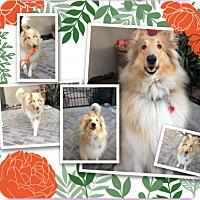 Adopt A Pet :: Chloe - Trabuco Canyon, CA